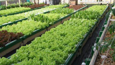 مزرعة أكوابونيك - ارشيفية