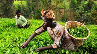 الزراعة في دول إفريقيا ؛ أفريقيا