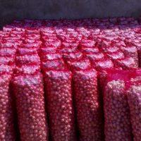 صادرات البصل