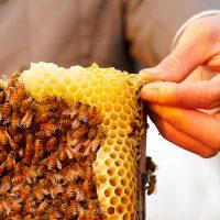 مناحل العسل ؛ عسل النحل