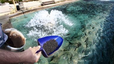 أعلاف الأسماك