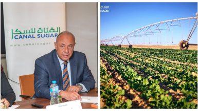 «القناة للسكر» تبدأ زراعة 5 آلاف فدان من محصولى عباد الشمس والفول الصويا