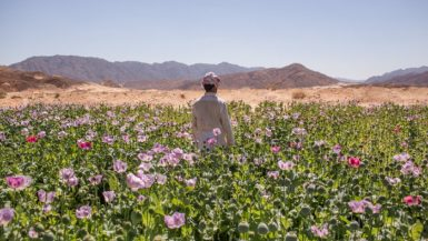 """""""الوزراء"""": 650 مليار جنيه استثمارات مشروعات تنمية سيناء منذ 2014"""