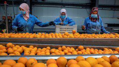 صادرات الأغذية ؛ الحاصلات الزراعية ؛ الموالح ؛ الغذائية